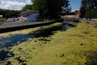 El PSOE insta al gobierno municipal a actuar en el anillo navegable del Piles